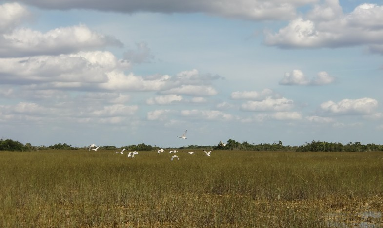 Birds over the glades
