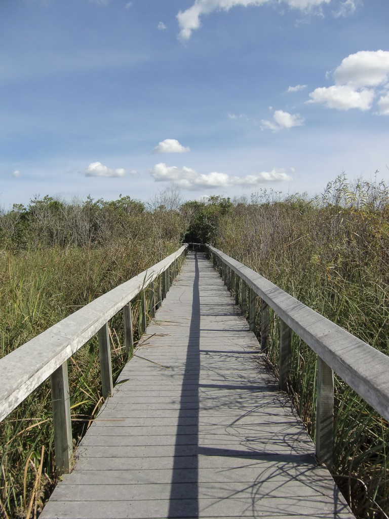 Walk through the Everglades