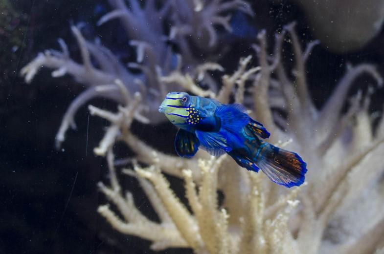 Aquarium Berlin