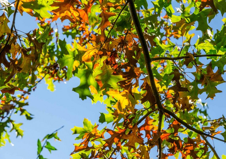 Leaves in all colors from light green to dark brown